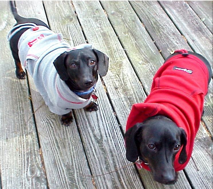 modelos de casacos moletons para cães
