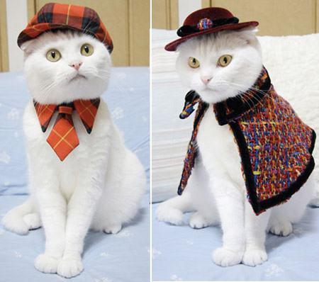 roupas de gatinhos macho e femêa