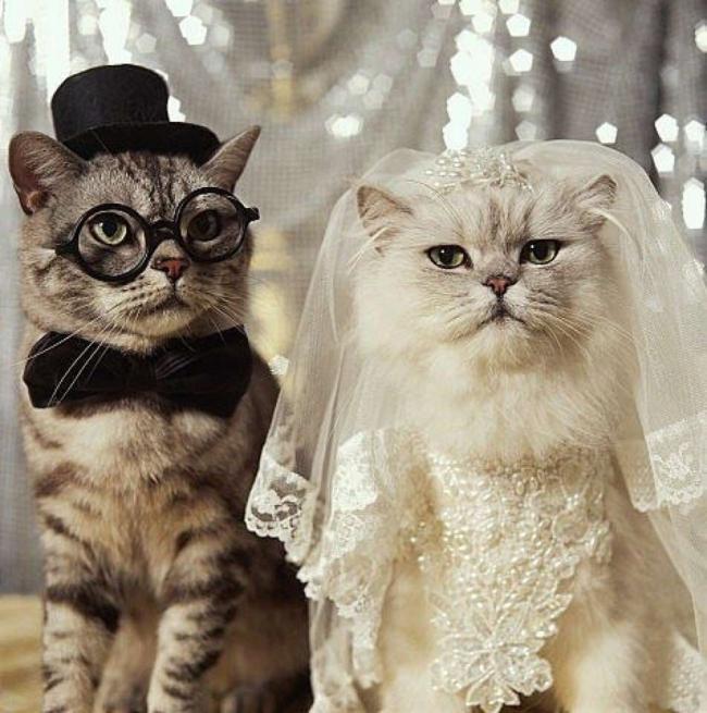 roupas de noivo e noiva de gatos