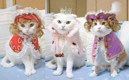 roupinhas de festa para gatos
