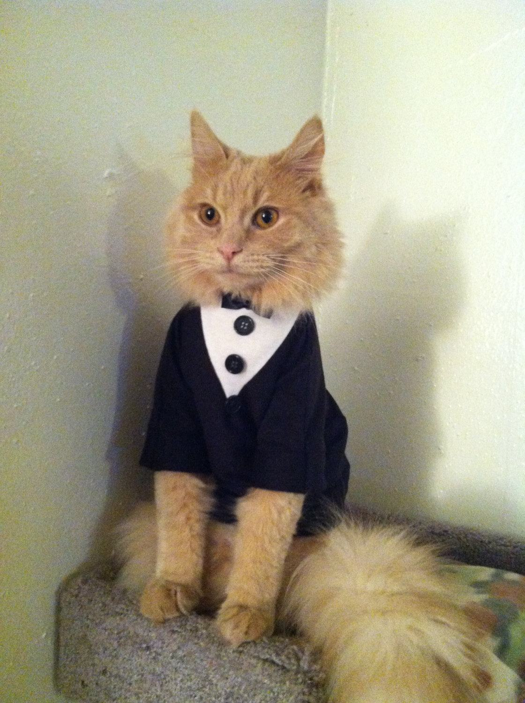 terno preto para gato