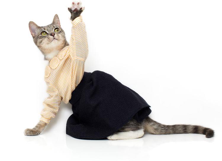 vestido preto e branco para gatas