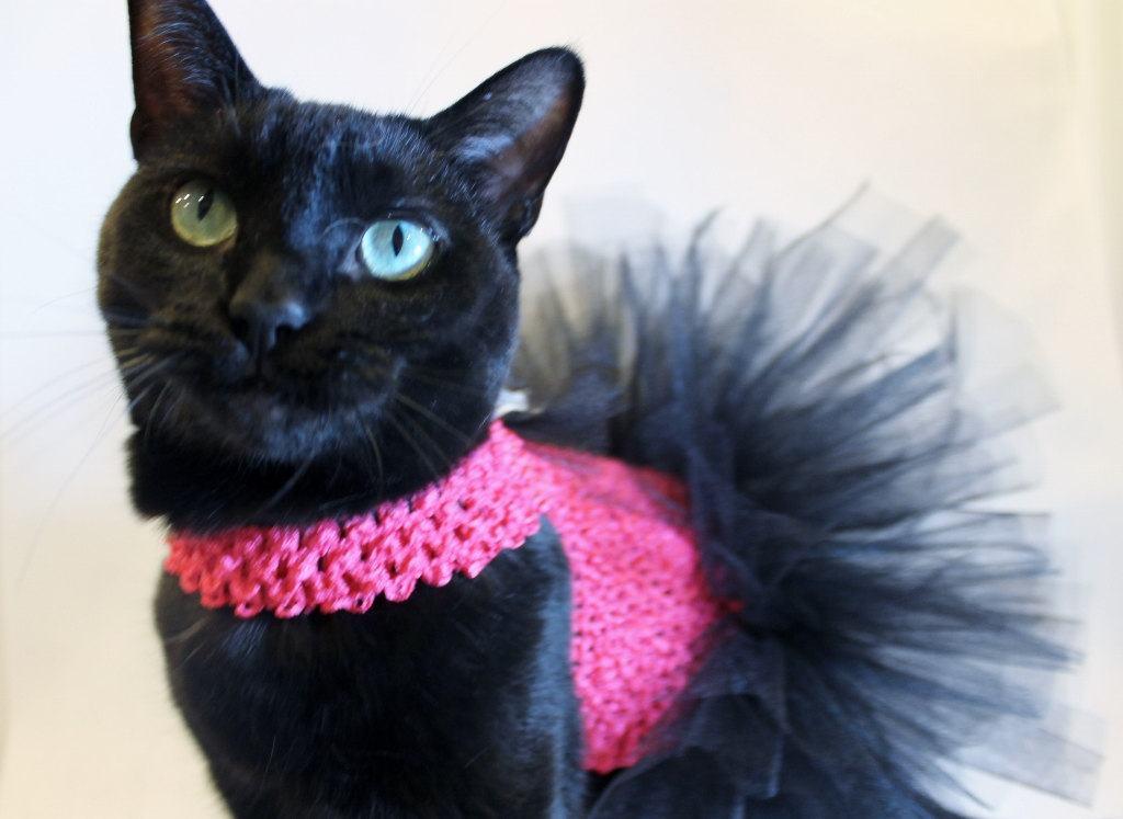 vestidos de bailarina para gatinhas