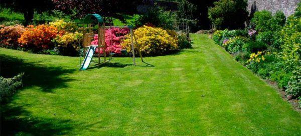 Tipos de Grama para plantar no Jardim, Opções